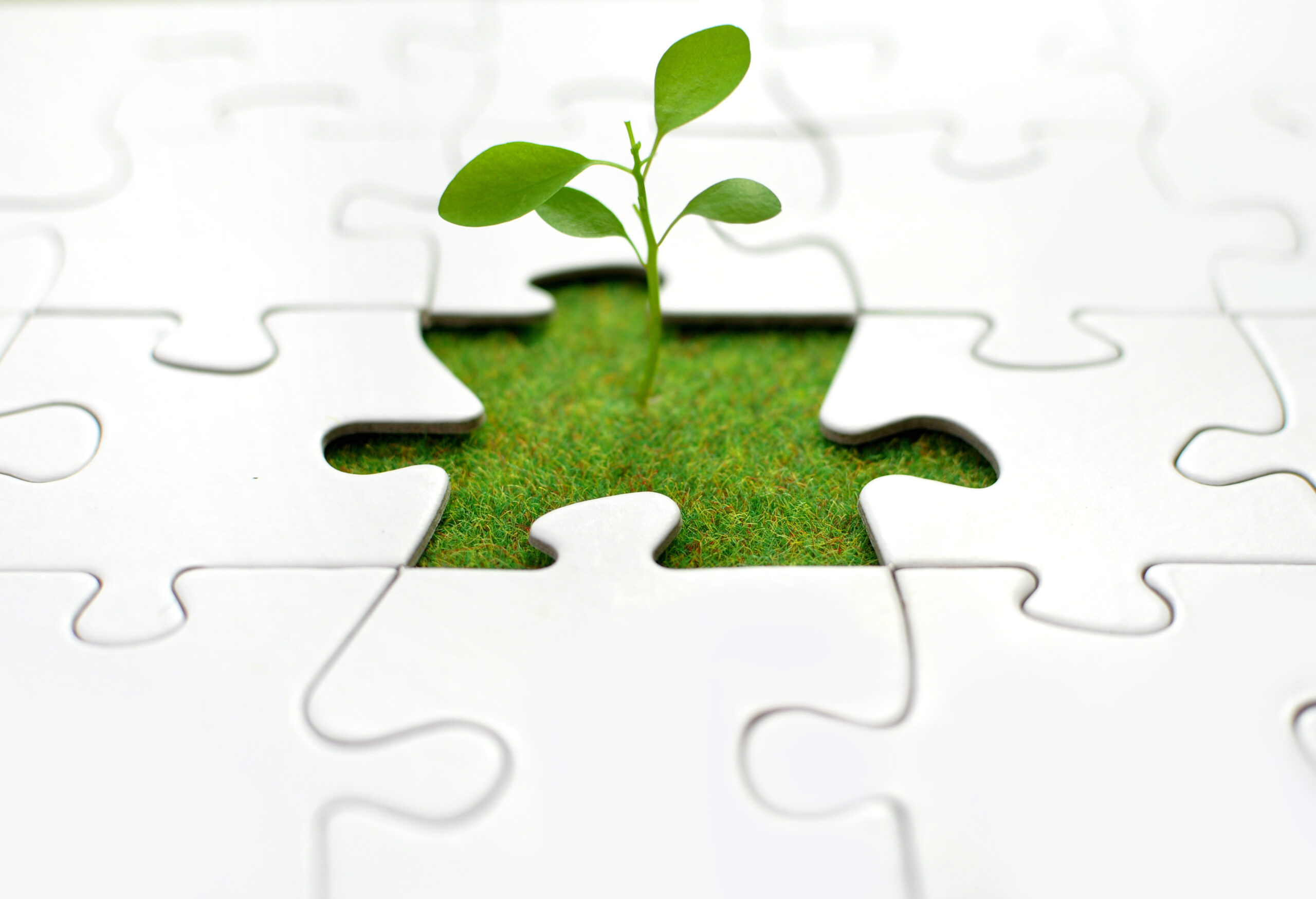 3 Simple ways your business can work towards a greener future